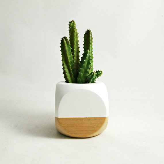 pot sized greenery for desk