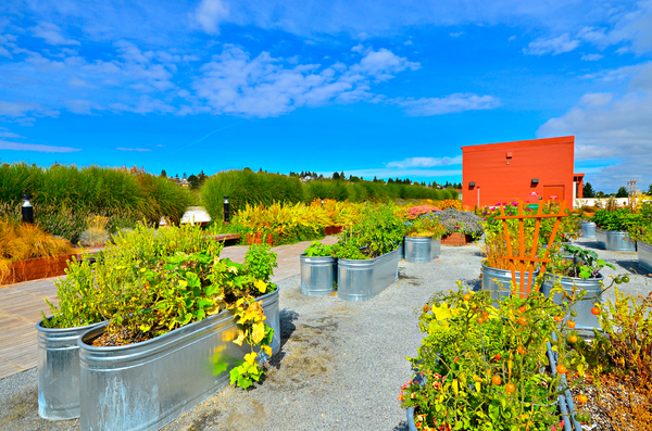 rooftop garden at Aura West Seattle Apartments